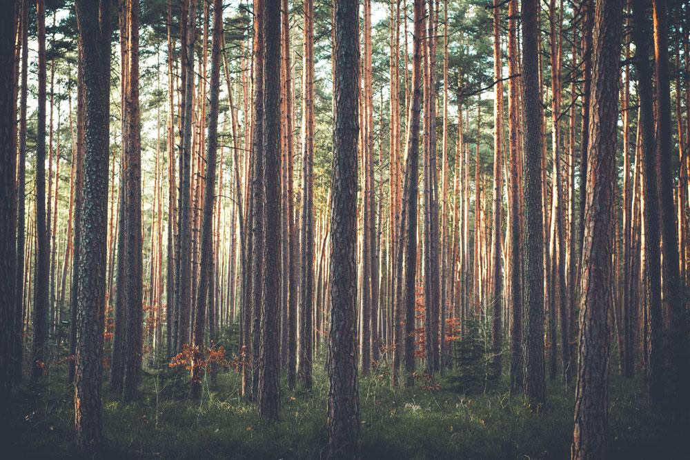 Abrazar árboles tiene multitud de beneficios para el cuerpo y la mente