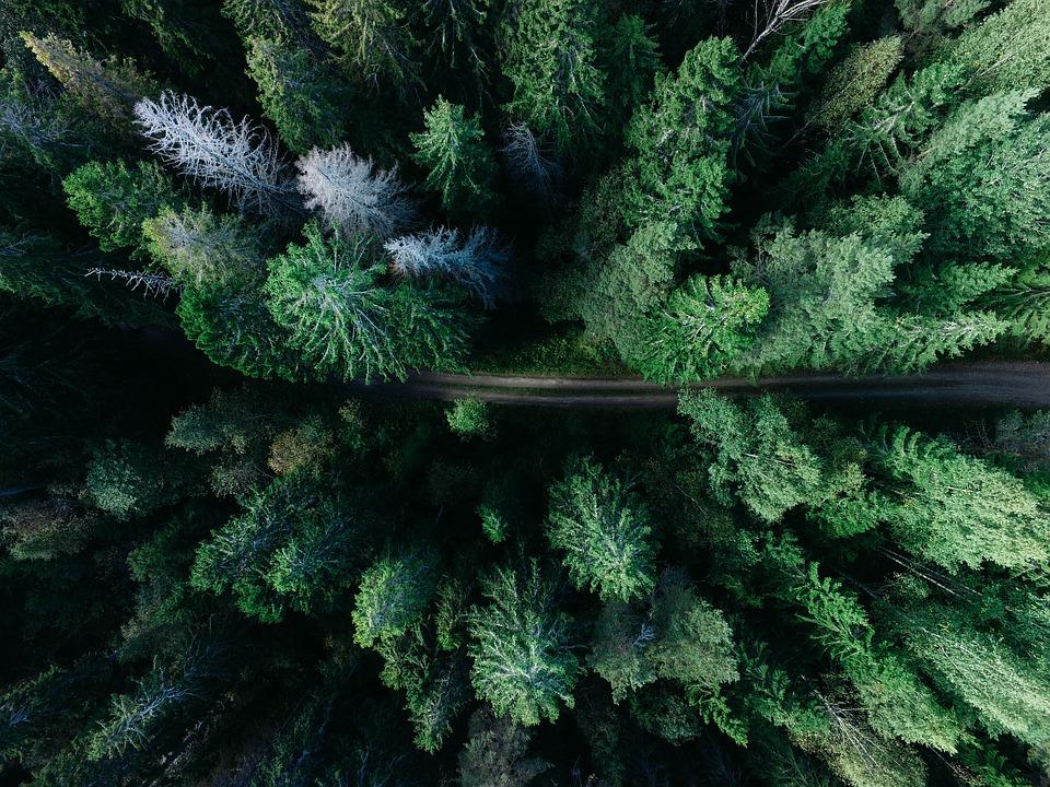 Los drones se han convertido en herramientas esenciales para la mejora de la sostenibilidad y el medio ambiente