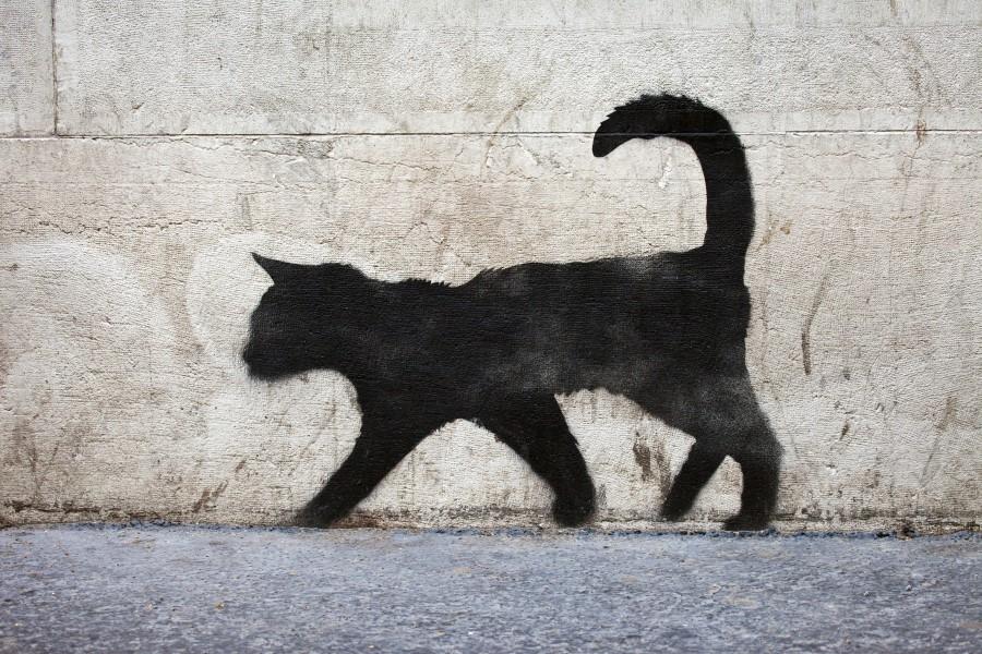 Los gatos negros, si te los cruzas, se supone que dan mala suerte, ¿pero más que un martes 13?