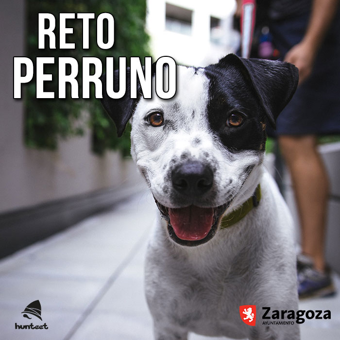 Reto Perruno en la app gratis de Hunteet organizado por Zarapeluda 2017, sube una foto con tu perro, ¡y gana premios!