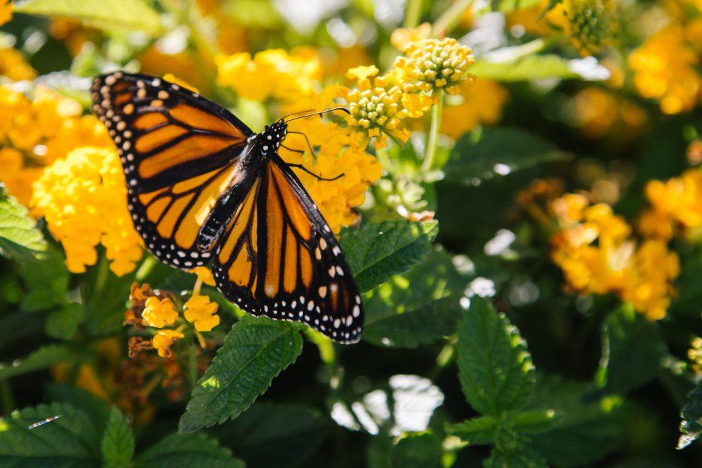 En primavera hay muchas flores e insectos con los que puedes tener planos geniales para hacer fotos