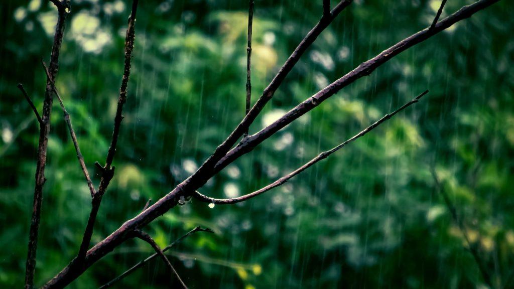 La lluvia llega en abril y con ella nuestros retos para ganar premios con ECODES