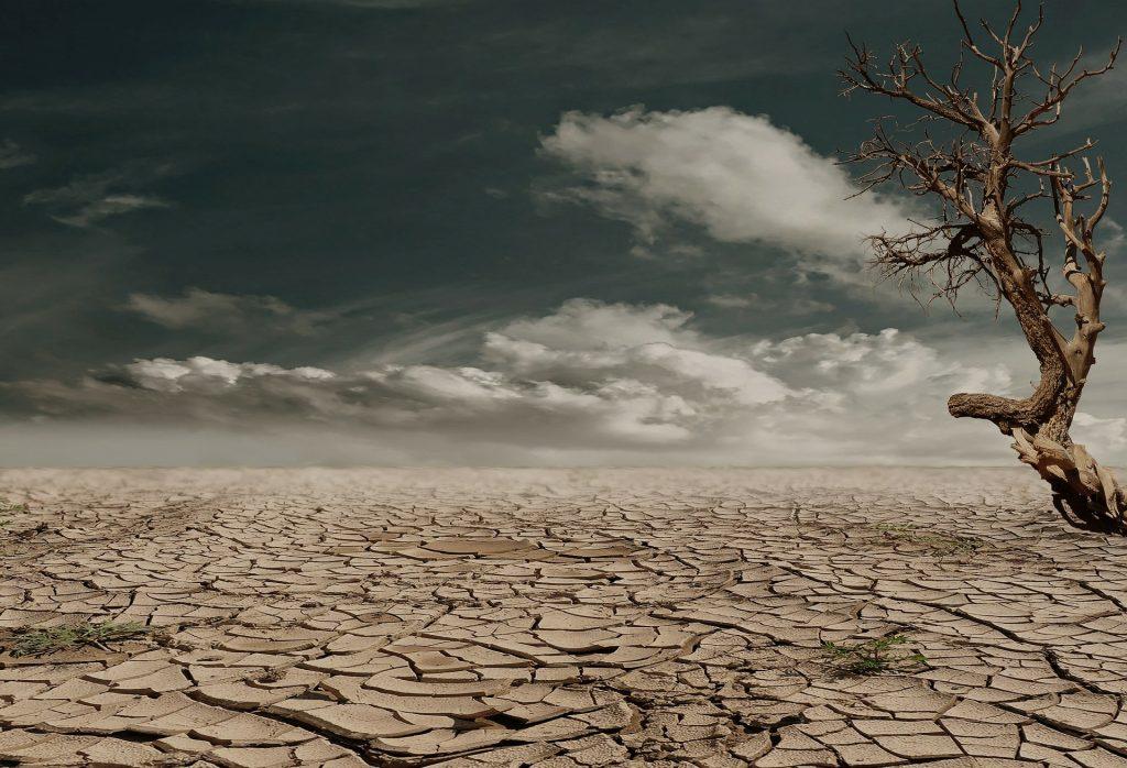 Con el aumento de las temperaturas debiado al cambio climático, aparece la sequía y se pierde producción alimentaria mundial