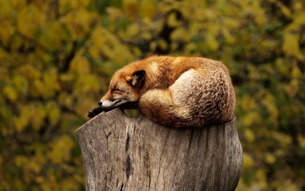Descansar es uno de los pilares fundamentales del programa por ti y en esta jornada nos enseña pikolin trucos y consejos para descansar y cómo ganar premios