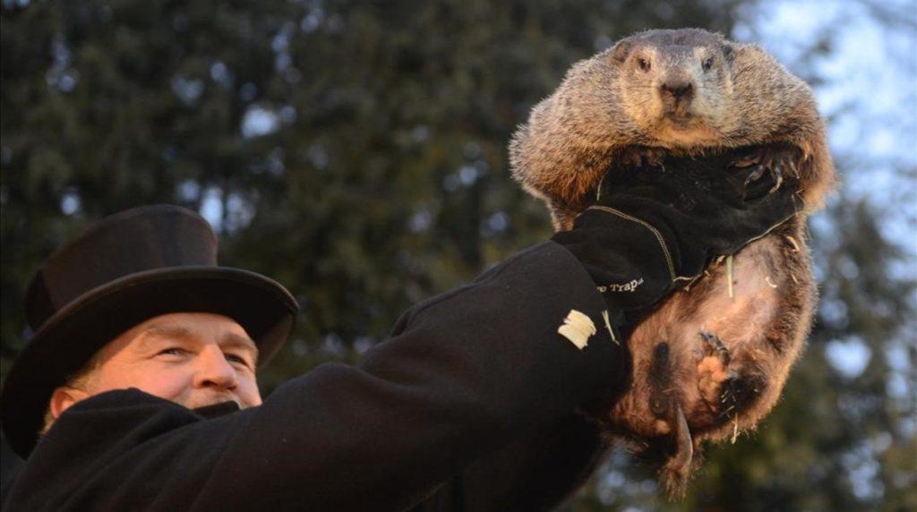 Día Mundial de los Animales Marmota Phil