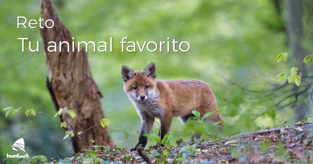 Día Mundial de los Animales Reto Tu animal favorito Completo