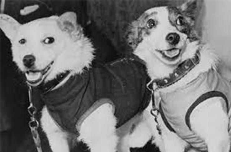 Conoce a Belka y Strelka que fueron los primeros animales en volver sanos y salvos tras un viaje espacial - Hipertextual