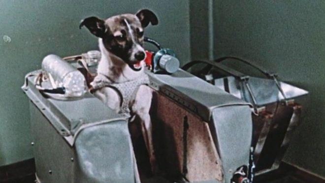 La perrita Laika fue el primer animal en ser enviado al espacio por la URSS en su carrera espacial - BBC